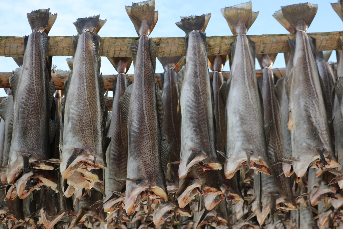 Sjøslag om fiskemilliardene